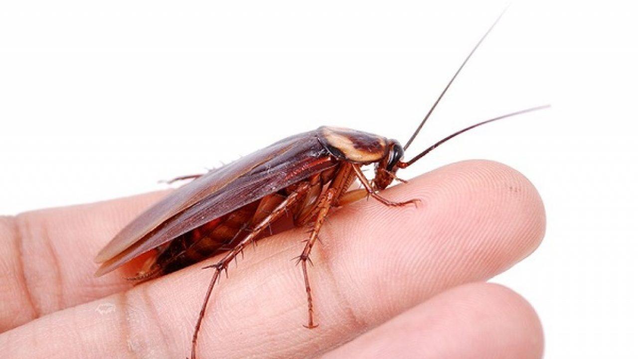picadura de insecto piel dura